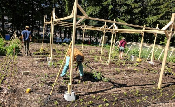 Plantation de semis dans le potager Rousselot de Paysage Solidaire