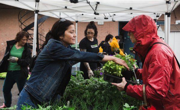 Photo de la distribution des fleurs de l'Éco-quartier Mercier-Hochelaga-Maisonneuve