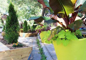 patio culturel d'Hochelaga-Maisonneuve projets de verdissement de YQQ
