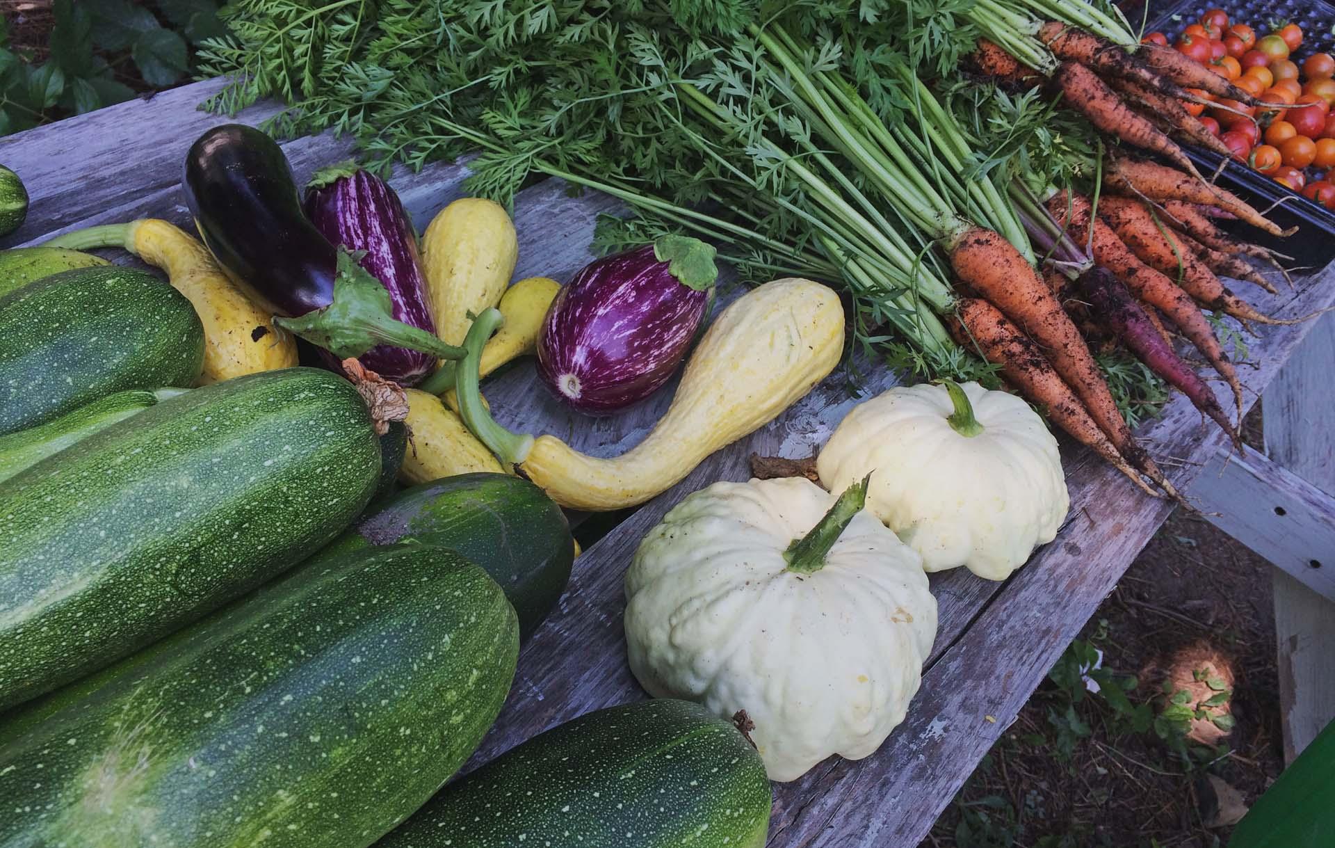 Slider pour projet d'agriculture urbaine Paysage Solidaire