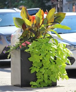 pots à fleur de la SDC Hochelaga verdi par YQQ